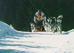 Dog Sledding, Haut-Doubs ski resorts