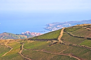 Banyuls, Roussillon wines and food pairing tips